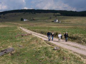 Hirschenstand im Erzgebirge