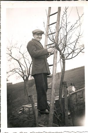 Beschneiden der Obstbäume