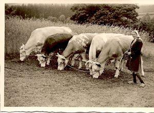 Kuh-Quintett