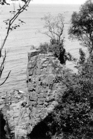 Bewachsener Fels im Meer