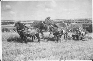Getreideernte in Pommern