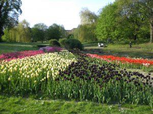 Tulpen im Westfalenpark