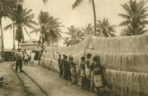 Das Aufhängen der gewaschenen Sisalfasern zum Trocknen, Afrika