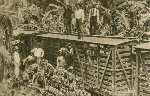 Verladen der Bananen, Costa Rica