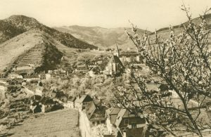 Pfirsichblüte in Spitz, Österreich