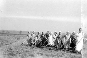 Frauen bei der Feldarbeit
