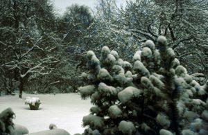 Winterliche Garten